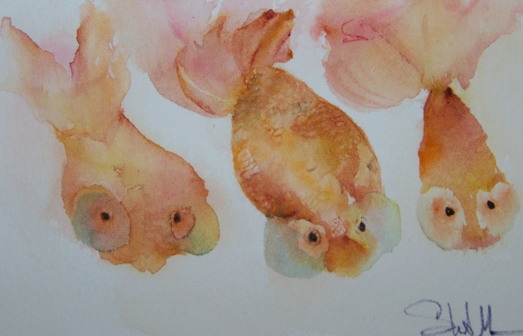 goldfish 001